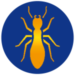 termites termite treatment and prevention bugs elite pest and termite fort smith arkansas exterminator