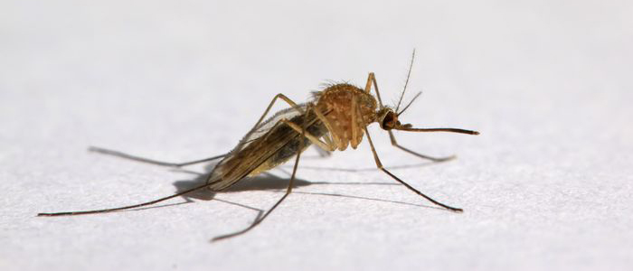 mosquito prevent mosquitoes exterminator elite pest and termite fort smith arkansas van buren arkansas