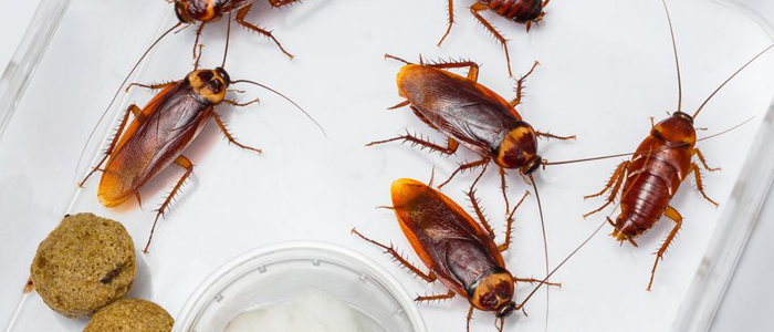 roach bug pest control kill roaches infestation exterminator elite pest and termite fort smith arkansas van buren arkansas